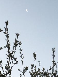 西の空には三日月が。